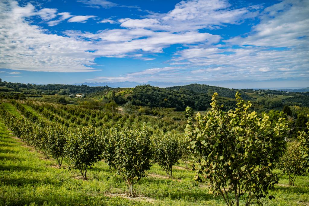 langhe nocciole Piemonte igp natura paesaggio